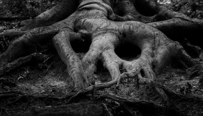 Blog Terrifying Trees This Halloween City Of Trees